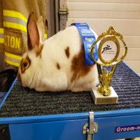 Blue Ribbon Rabbit